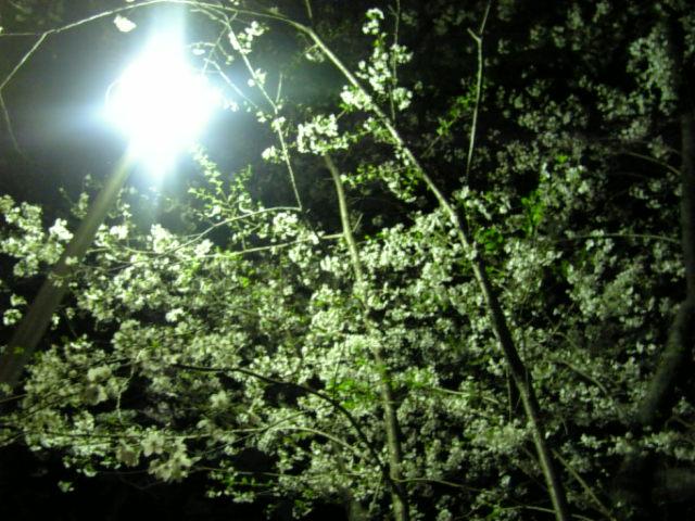image/shiannote-2007-04-05T23:23:51-1.JPG